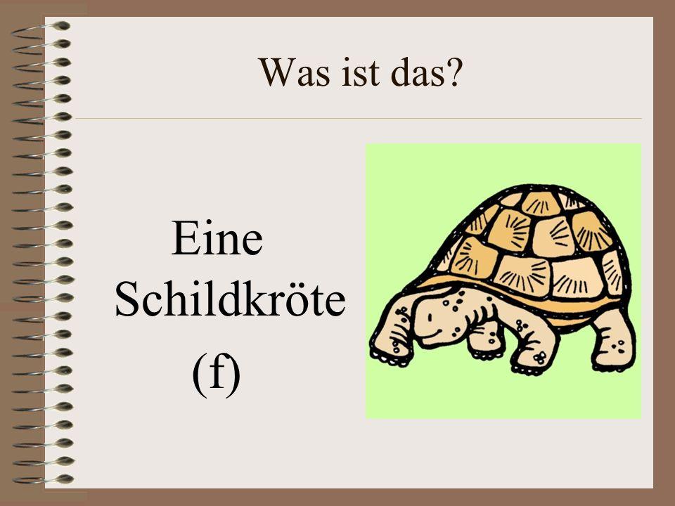 Was ist das Eine Schildkröte (f)