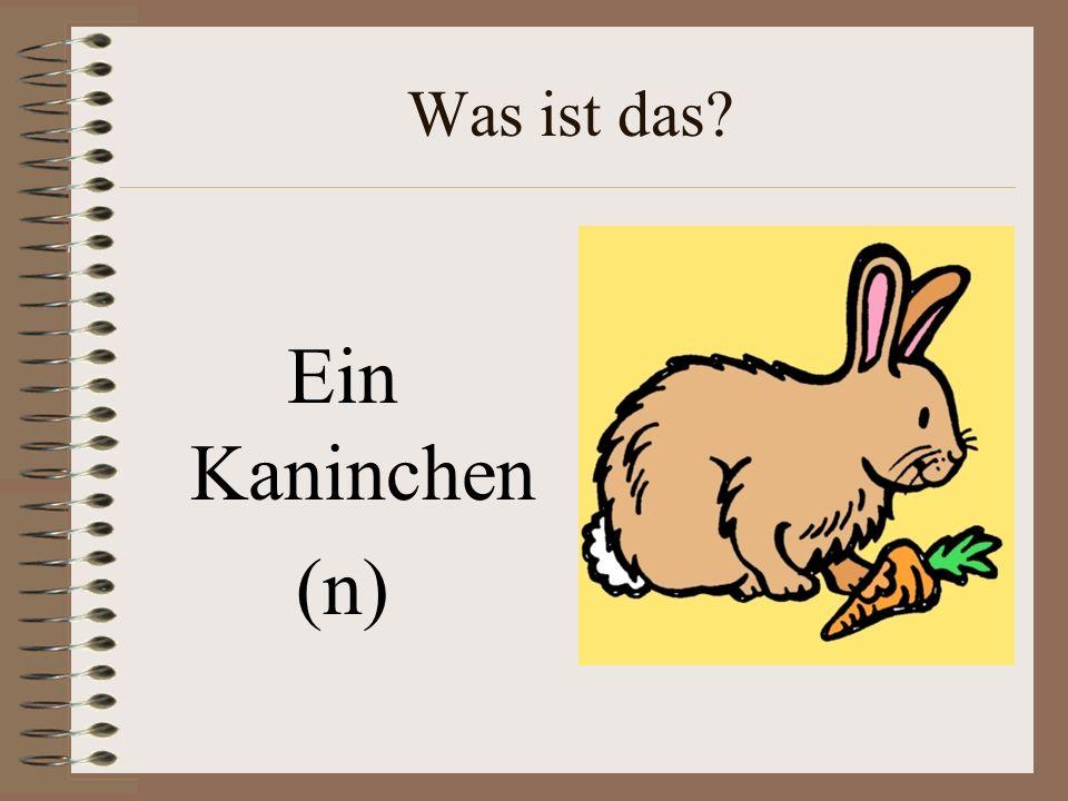 Was ist das Ein Kaninchen (n)