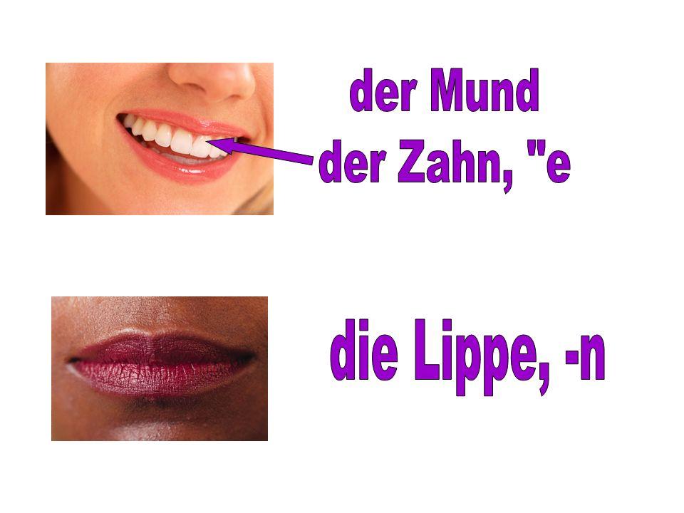 der Mund der Zahn, e die Lippe, -n