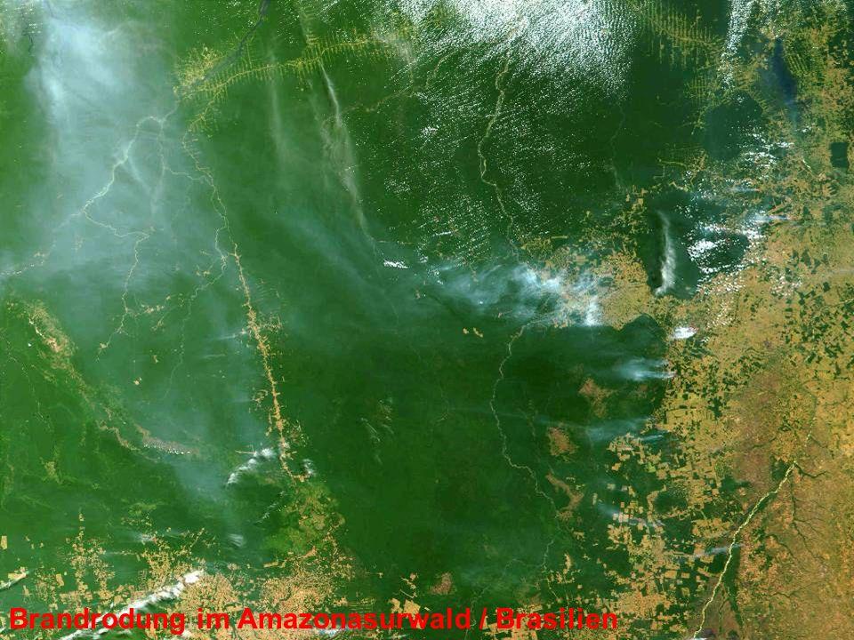 Brandrodung im Amazonasurwald / Brasilien