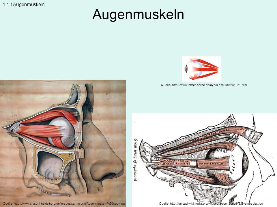 Augenmuskeln 1.1.1Augenmuskeln
