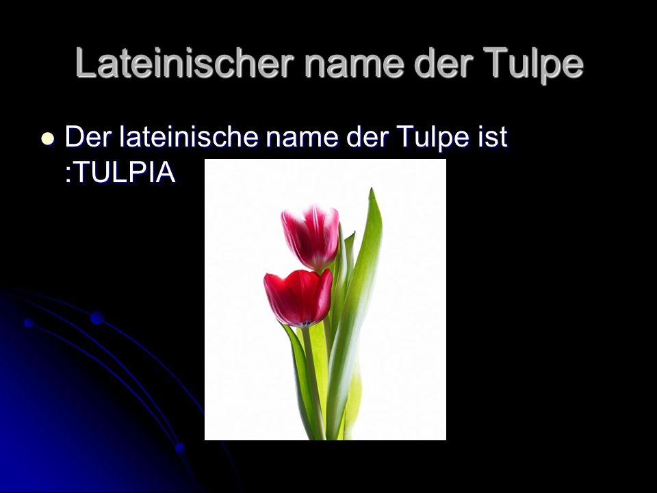 Lateinischer name der Tulpe