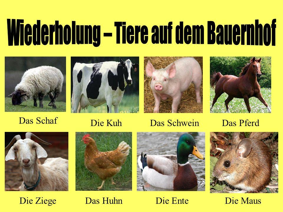 Wiederholung – Tiere auf dem Bauernhof