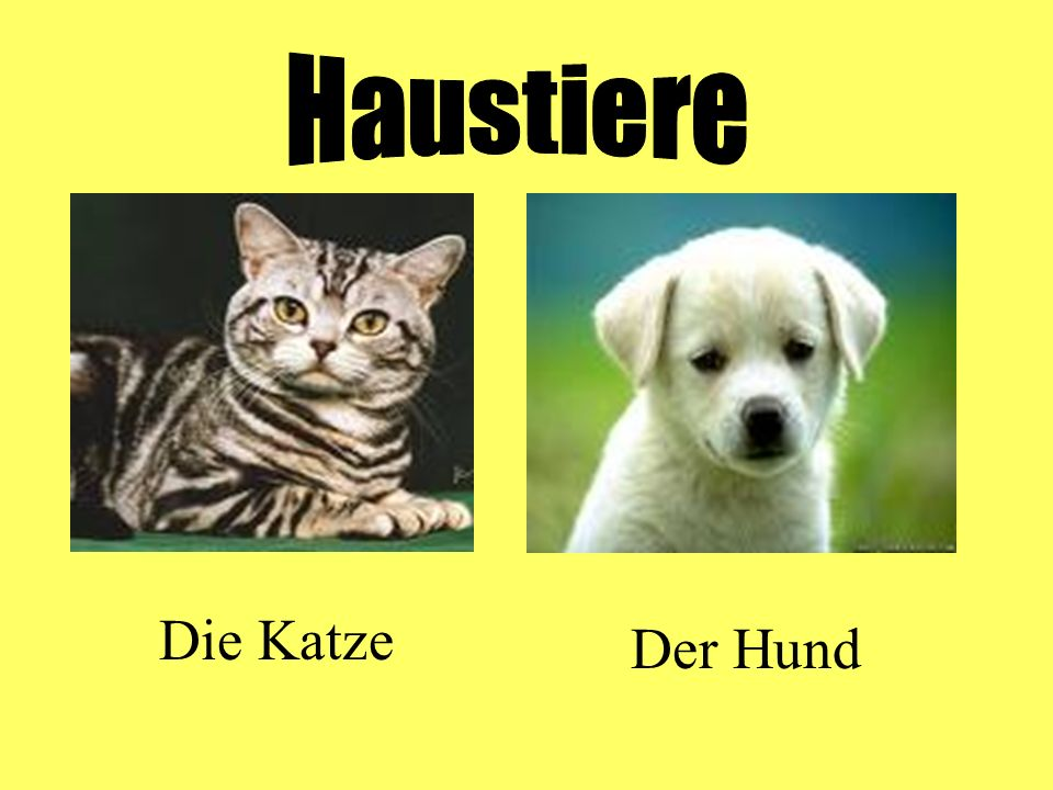 Haustiere Die Katze Der Hund