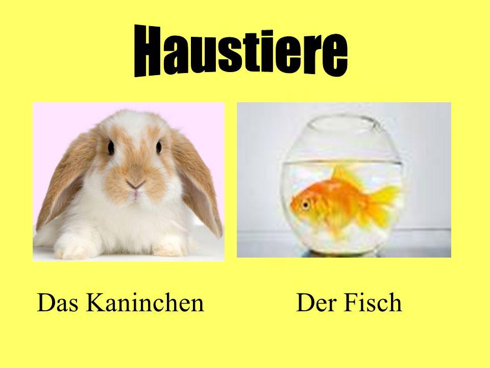 Haustiere Das Kaninchen Der Fisch
