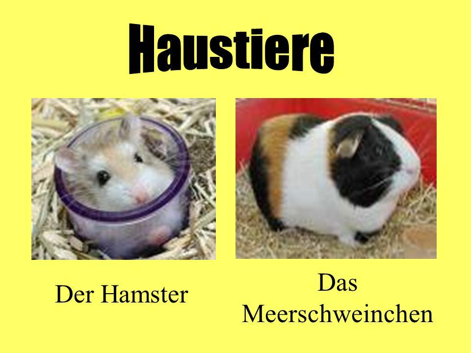 Haustiere Das Meerschweinchen Der Hamster