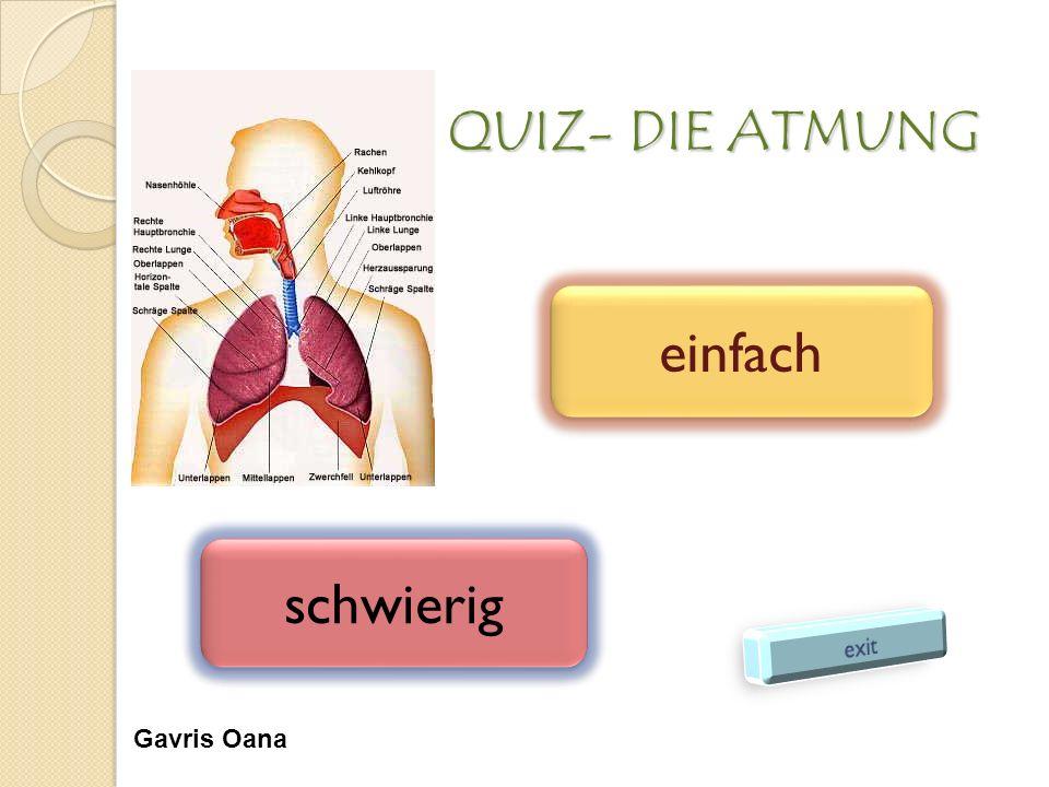 Erfreut Atmungssystem Anatomie Und Physiologie Quiz Galerie ...