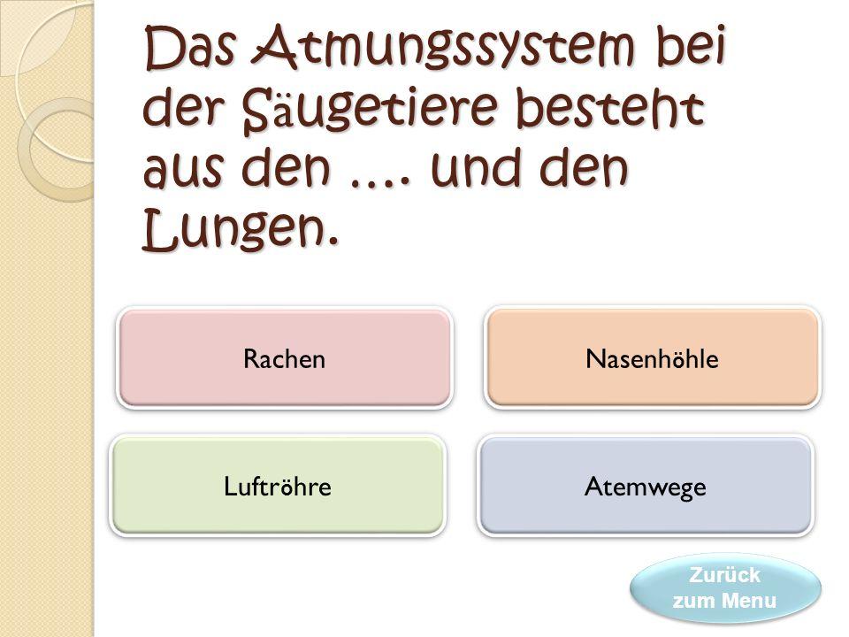 Großzügig Das Atmungssystem Anatomie Zeitgenössisch - Anatomie Ideen ...