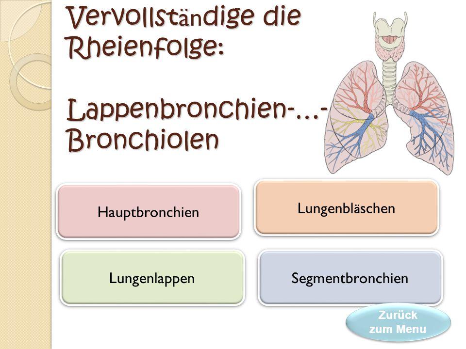 Vervollständige die Rheienfolge: Lappenbronchien-…-Bronchiolen