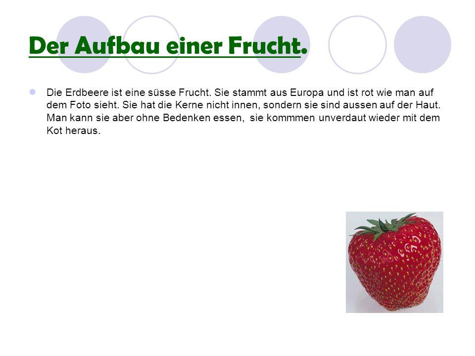 Der Aufbau einer Frucht.