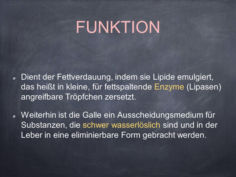 Groß Funktion Des Dünndarms Zeitgenössisch - Menschliche Anatomie ...
