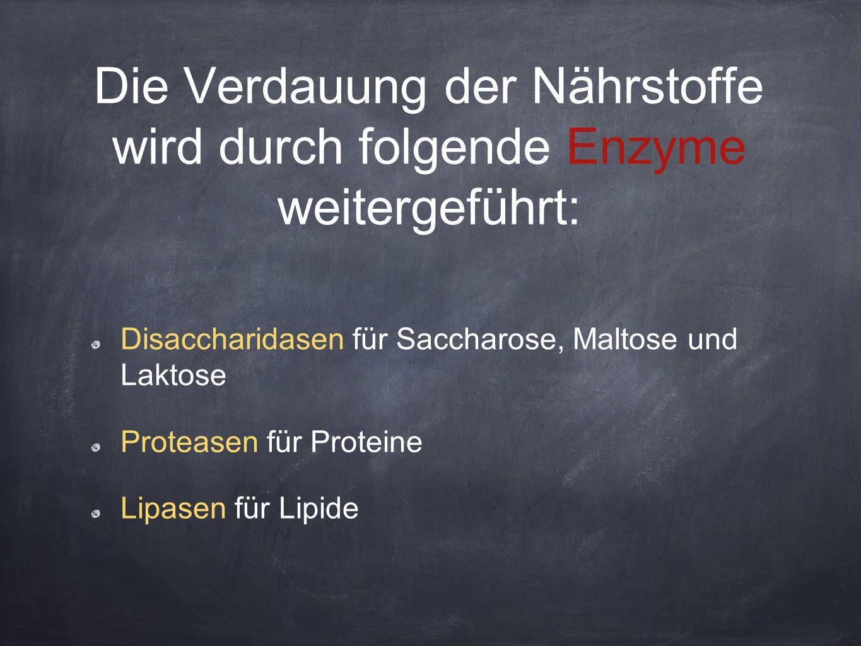 Die Verdauung der Nährstoffe wird durch folgende Enzyme weitergeführt: