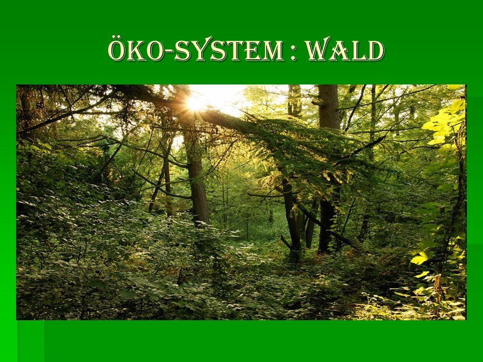 öKO-SYSTEM : WALD