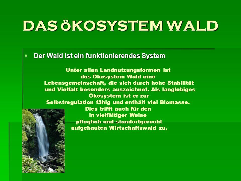 DAS öKOSYSTEM WALD Der Wald ist ein funktionierendes System