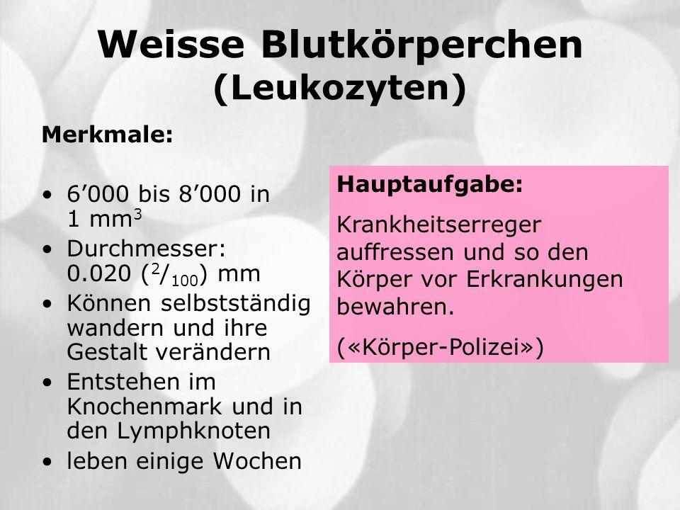 Weisse Blutkörperchen (Leukozyten)
