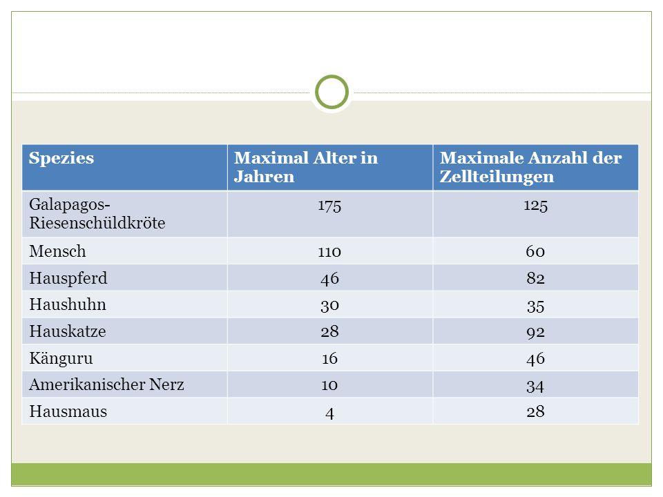 Spezies Maximal Alter in Jahren. Maximale Anzahl der Zellteilungen. Galapagos-Riesenschüldkröte. 175.