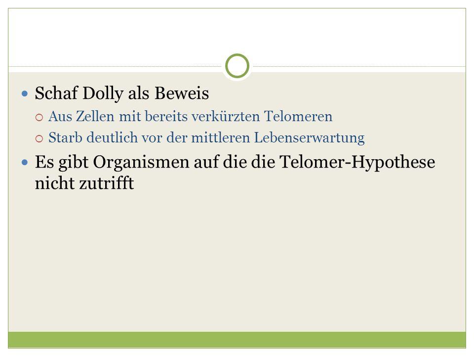 Es gibt Organismen auf die die Telomer-Hypothese nicht zutrifft