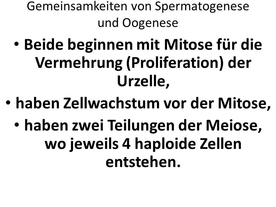 Fantastisch Mitose Und Meiose Arbeitsblatt Bilder - Super Lehrer ...