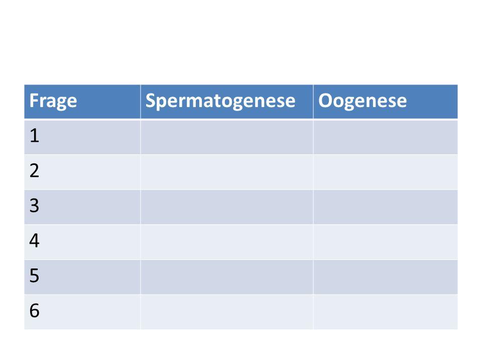 Frage Spermatogenese Oogenese 1 2 3 4 5 6