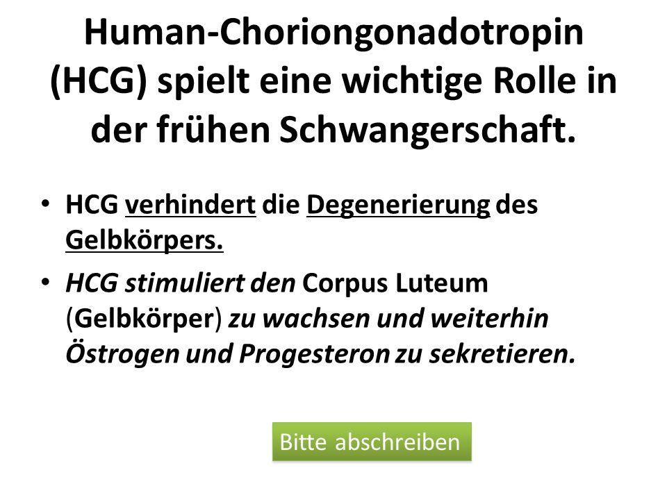 Human-Choriongonadotropin (HCG) spielt eine wichtige Rolle in der frühen Schwangerschaft.