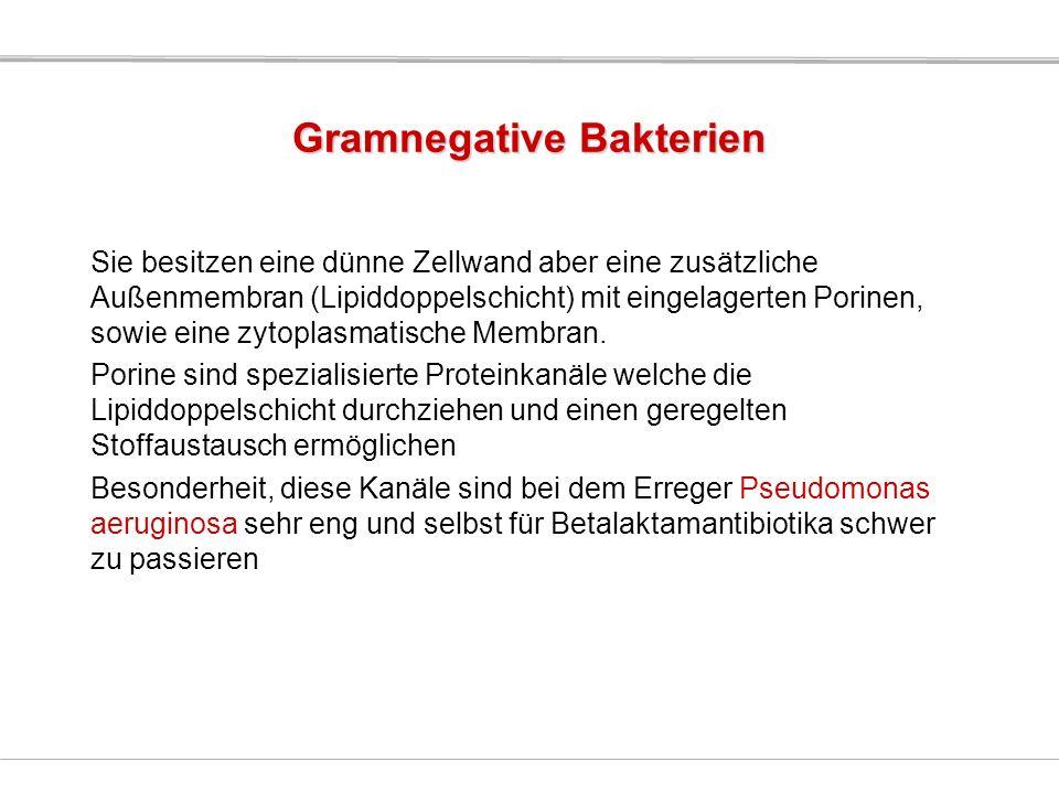 Gramnegative Bakterien