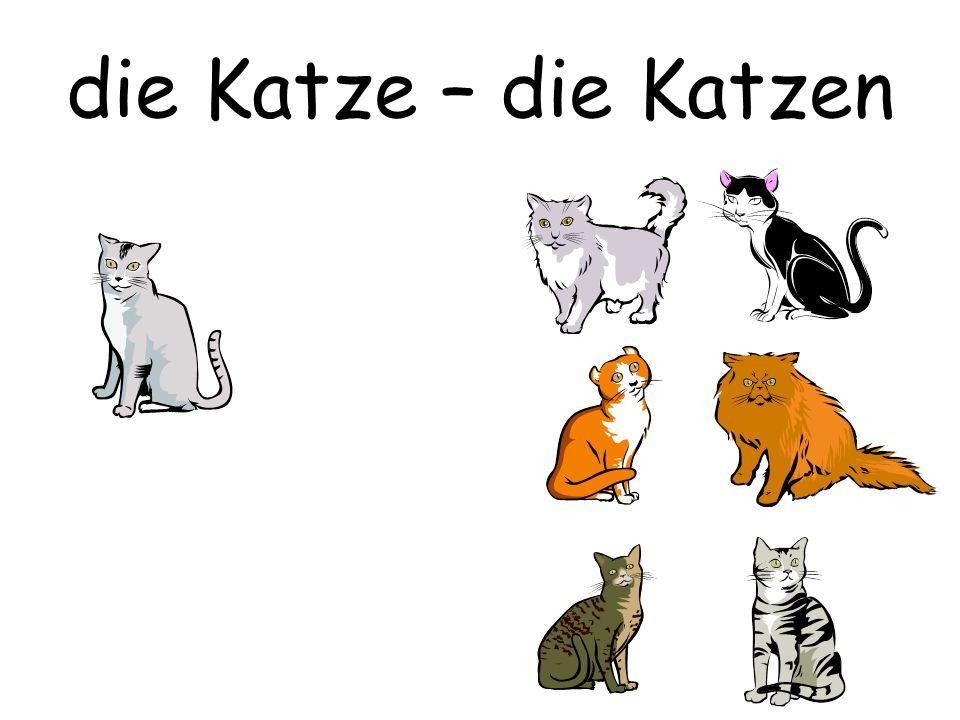 die Katze – die Katzen