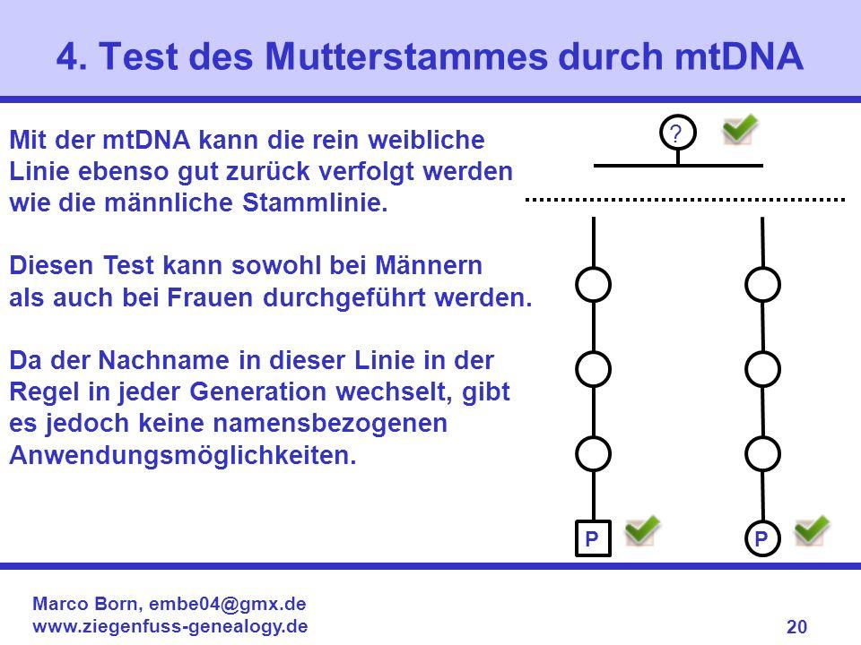 4. Test des Mutterstammes durch mtDNA