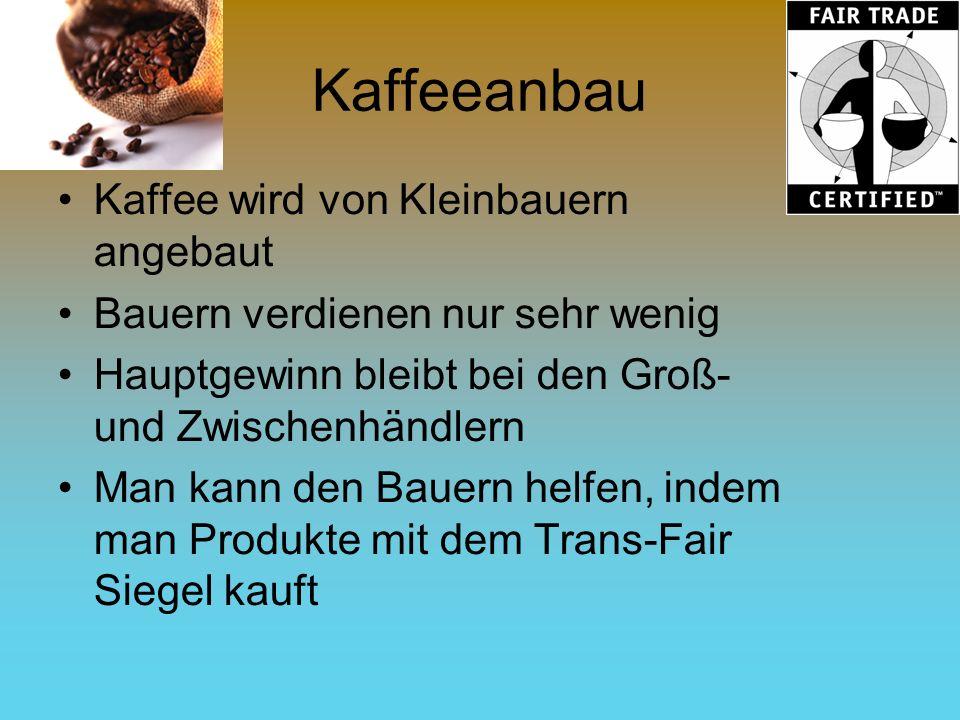 Kaffeeanbau Kaffee wird von Kleinbauern angebaut