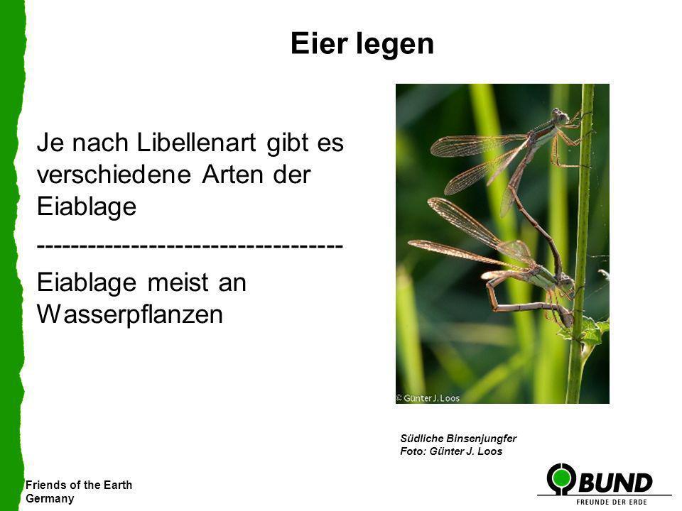 Eier legenJe nach Libellenart gibt es verschiedene Arten der Eiablage ----------------------------------- Eiablage meist an Wasserpflanzen