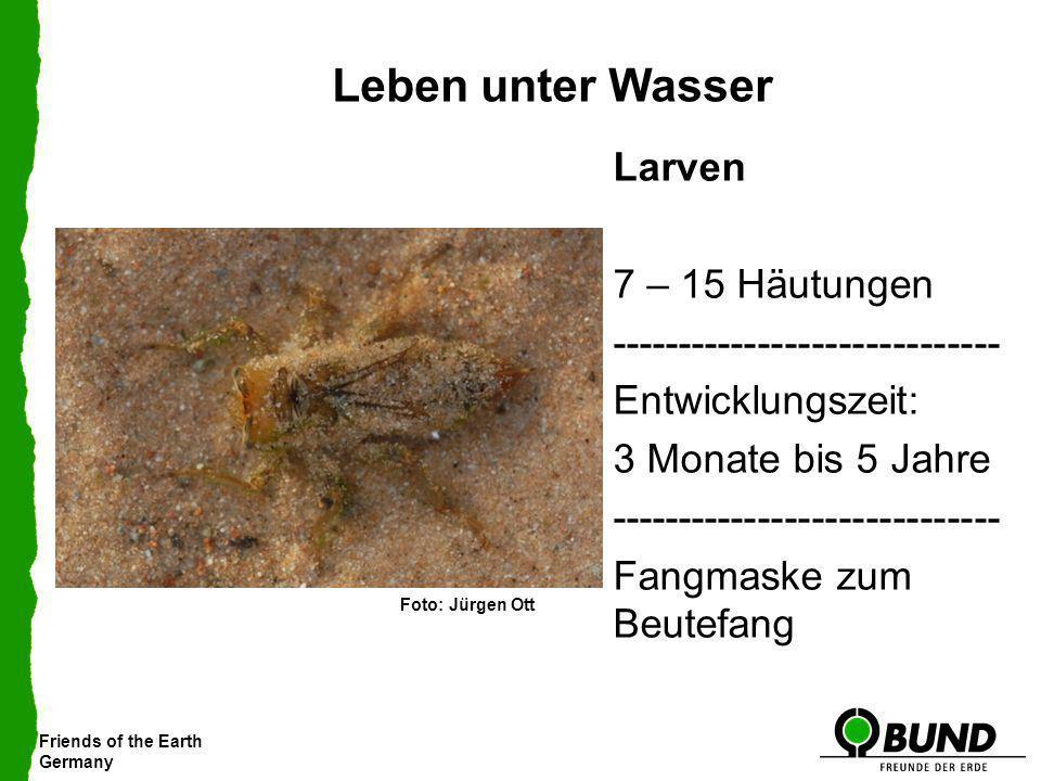 Leben unter Wasser Larven 7 – 15 Häutungen ----------------------------- Entwicklungszeit: 3 Monate bis 5 Jahre Fangmaske zum Beutefang