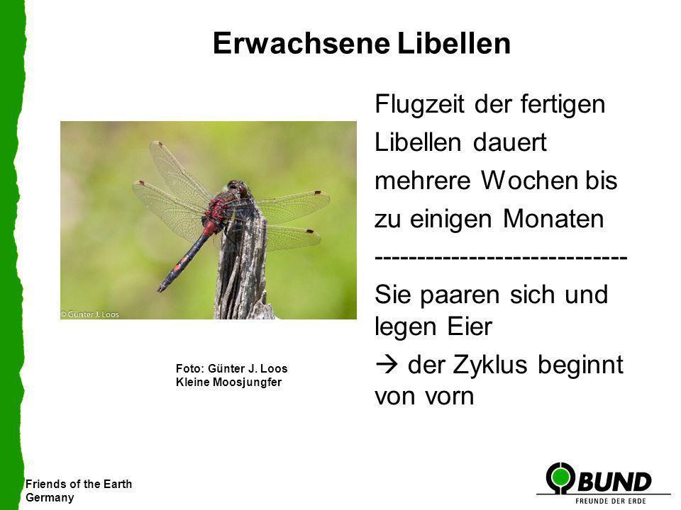 Erwachsene Libellen