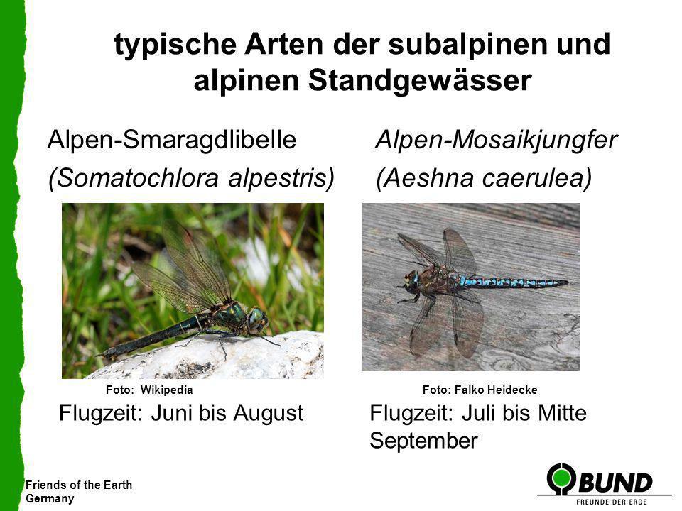 typische Arten der subalpinen und alpinen Standgewässer