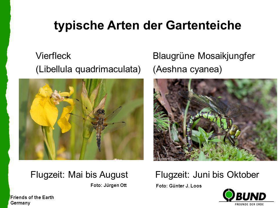 typische Arten der Gartenteiche