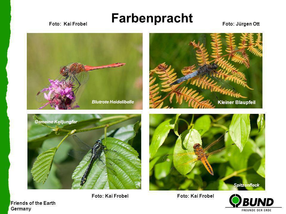 Farbenpracht Foto: Kai Frobel Foto: Jürgen Ott Kleiner Blaupfeil