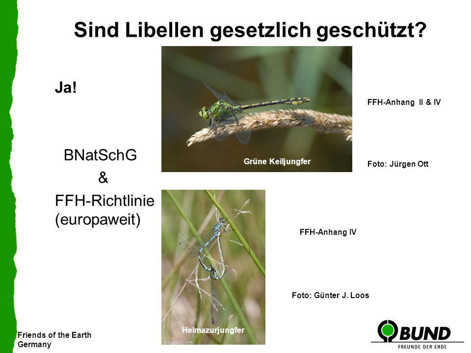 Sind Libellen gesetzlich geschützt
