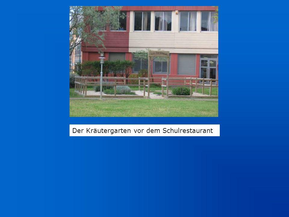 Der Kräutergarten vor dem Schulrestaurant