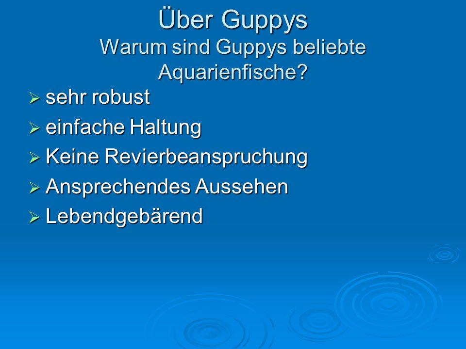 Über Guppys Warum sind Guppys beliebte Aquarienfische