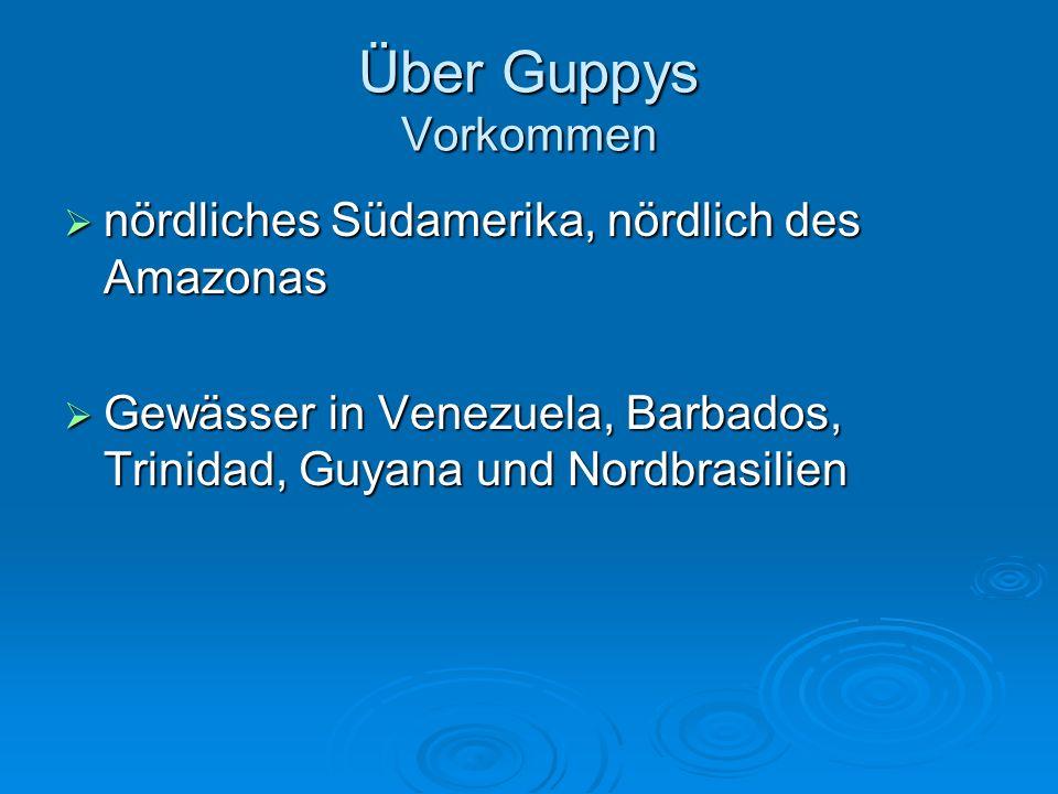 Über Guppys Vorkommen nördliches Südamerika, nördlich des Amazonas
