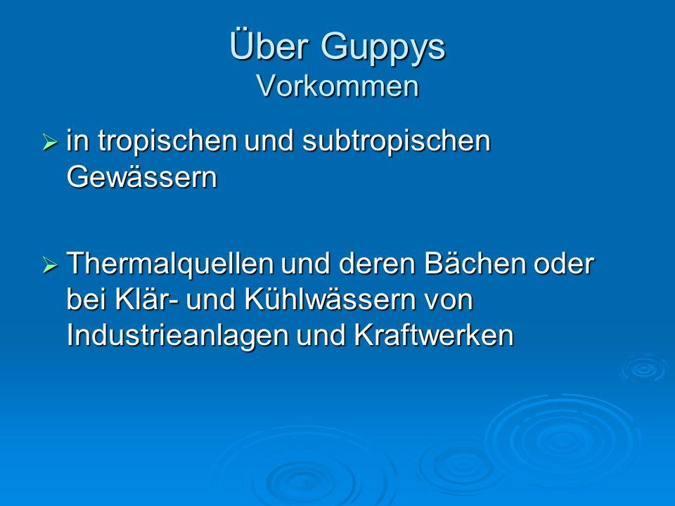 Über Guppys Vorkommen in tropischen und subtropischen Gewässern
