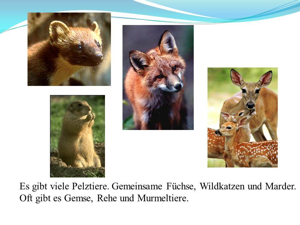 Es gibt viele Pelztiere. Gemeinsame Füchse, Wildkatzen und Marder