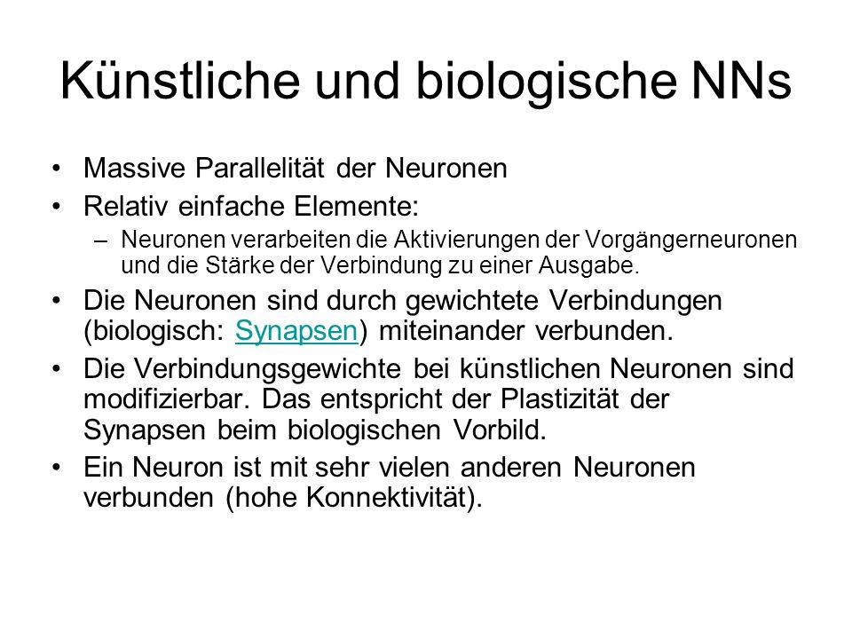 Künstliche und biologische NNs