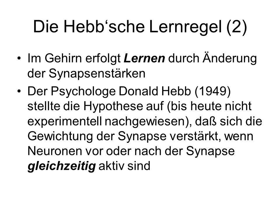 Die Hebb'sche Lernregel (2)