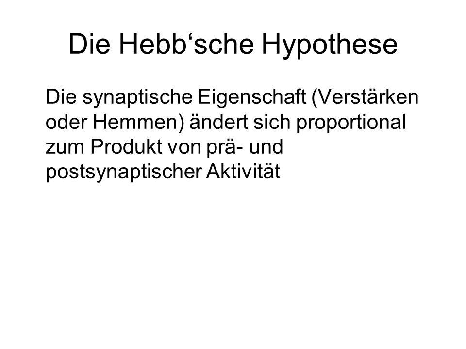 Die Hebb'sche Hypothese