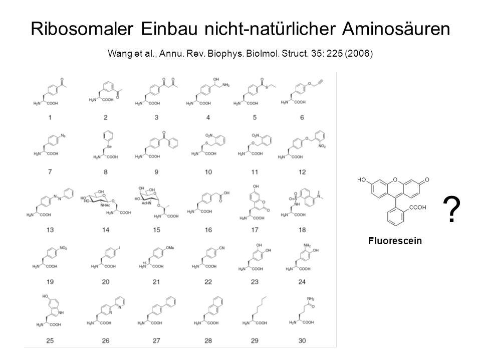 Ribosomaler Einbau nicht-natürlicher Aminosäuren