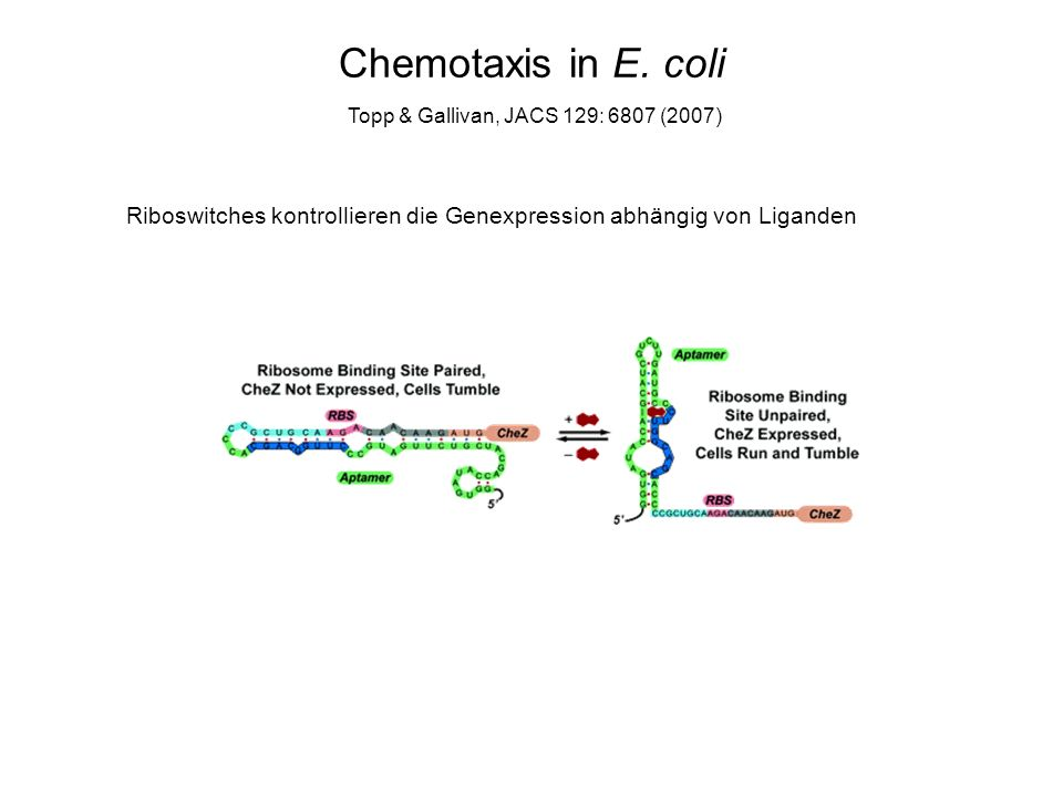 Chemotaxis in E.