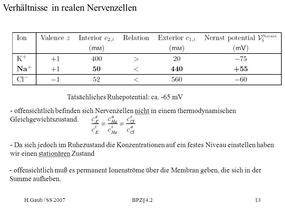 Verhältnisse in realen Nervenzellen