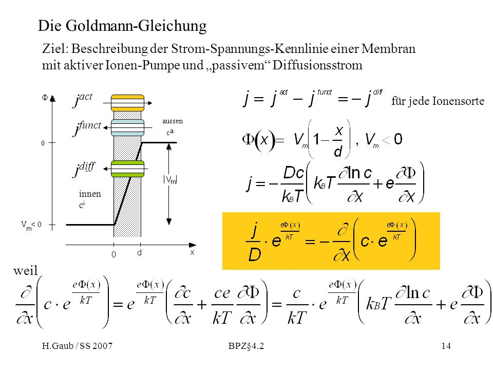 Die Goldmann-Gleichung