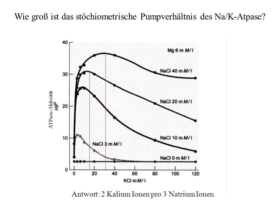 Wie groß ist das stöchiometrische Pumpverhältnis des Na/K-Atpase
