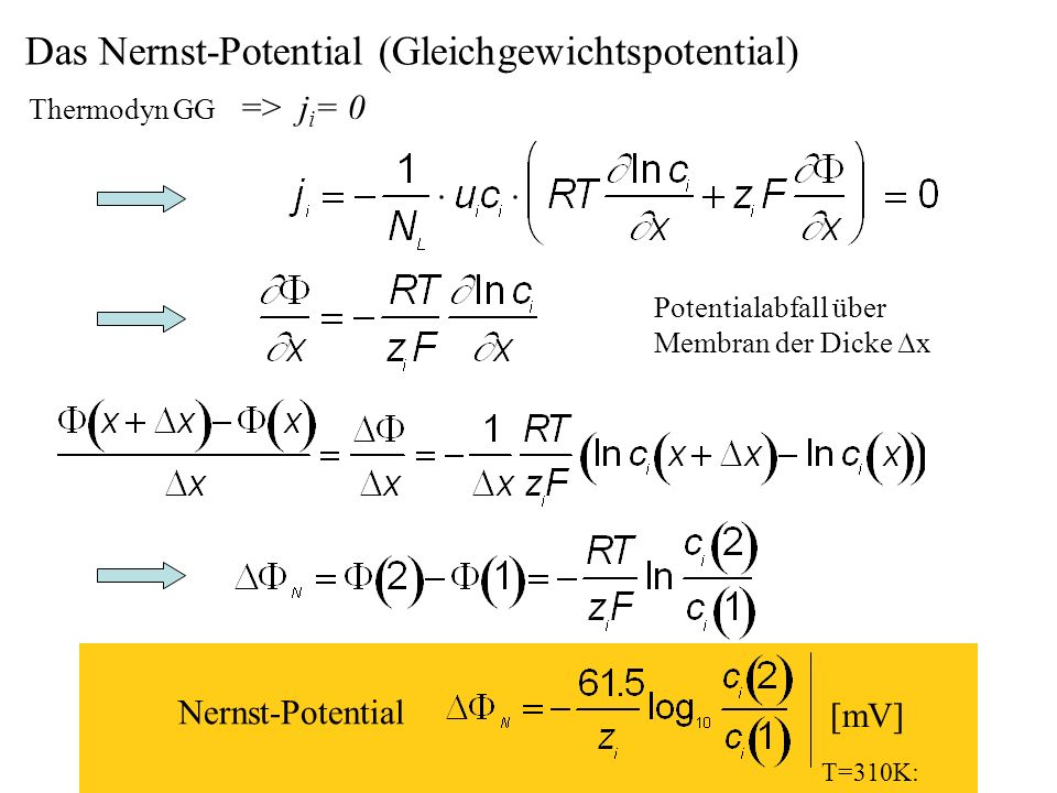 Das Nernst-Potential (Gleichgewichtspotential)