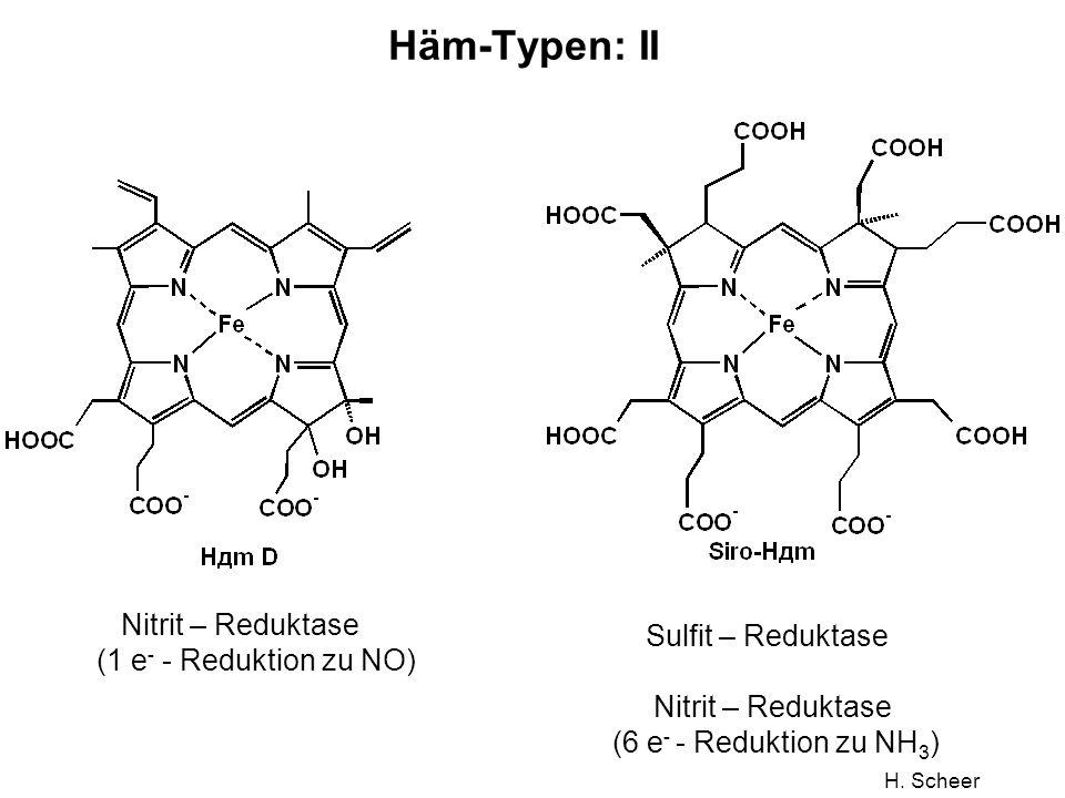 Häm-Typen: II Nitrit – Reduktase Sulfit – Reduktase